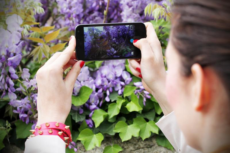 glicine | primavera | fiori | piante | lilla | viola  1