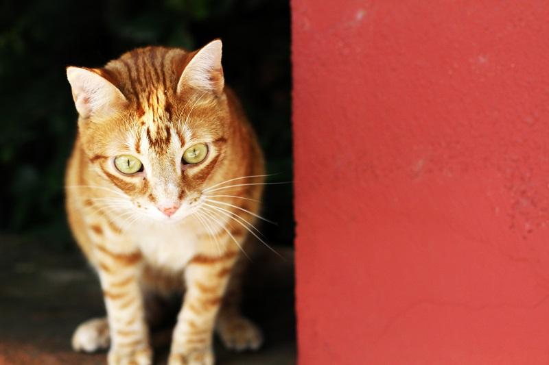 gatto | gattino | gatto tigrato | cucciolo | animaletto | animale carino | gatto carino | occhi gatto