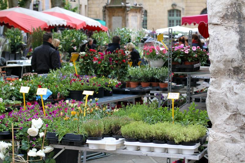 mercato dei fiori | mercato dei fiori aix en provence | aix en provence | provenza 1
