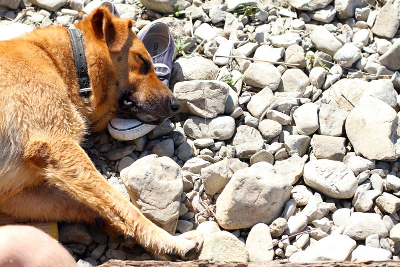 lago di bilancino | dodo | labrador | pastore tedesco | meticcio | bastardino | dodo irene closet | animali blogger | cani blogger