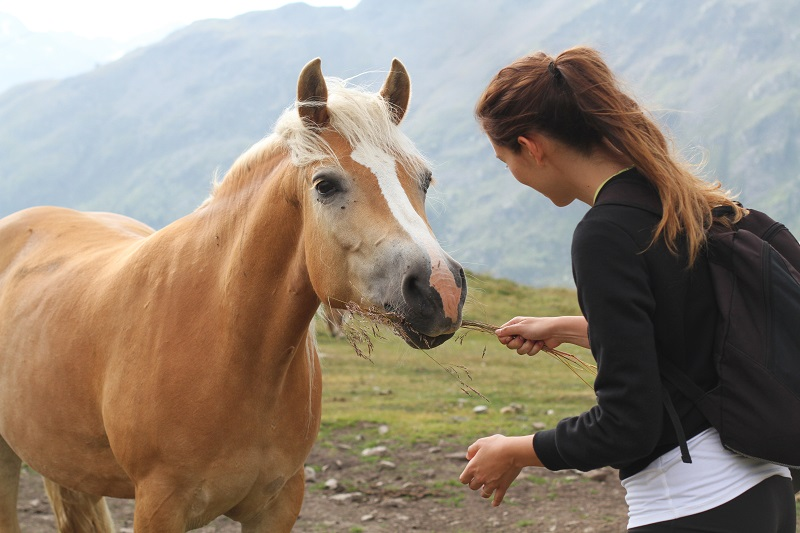 pet therapy | cavallo |  animali montagna