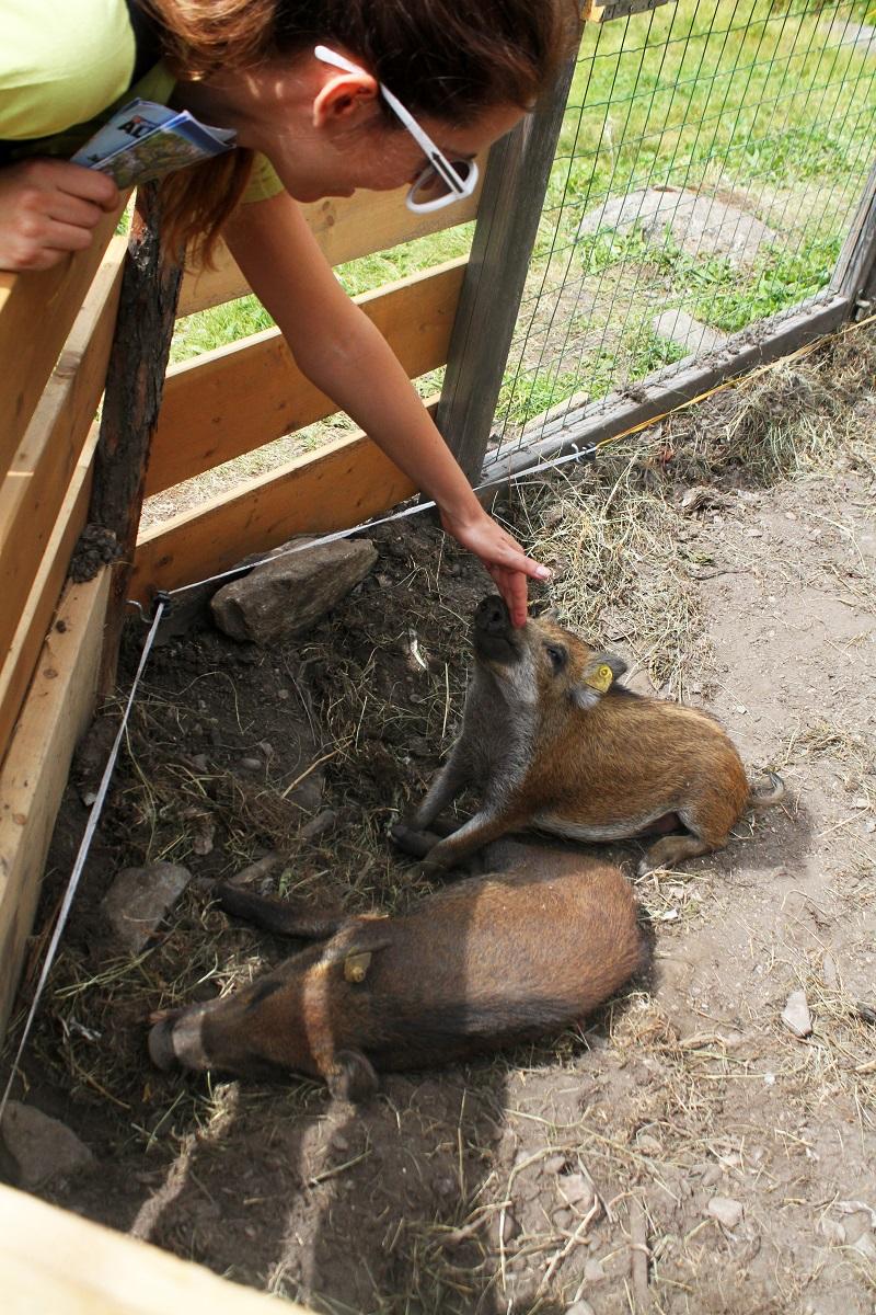 pet therapy    cinghiali    cinghialino   animali montagna 2