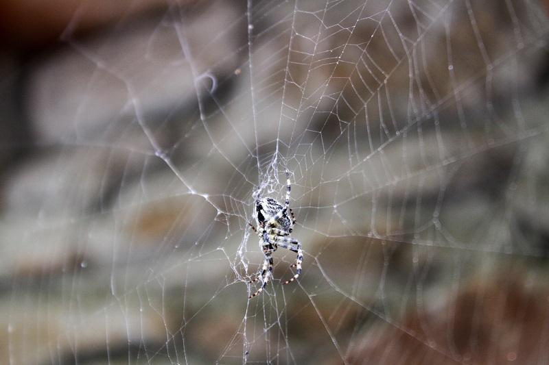 ragno   ragnatela   animali montagna