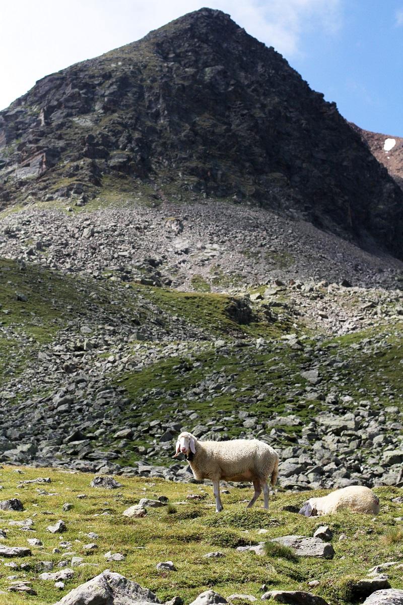 immagini paesaggi | foto paesaggi | montagna estate | solden | tirolo | austria | valle verde | valle otzal 1