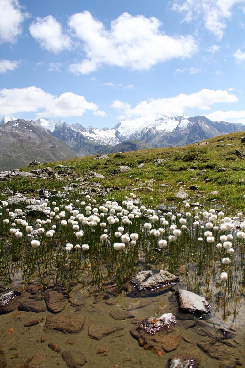 immagini paesaggi | foto paesaggi | montagna estate | solden | tirolo | austria | valle verde | valle otzal 5