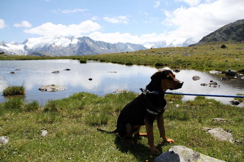 cane montagna |  immagini paesaggi | foto paesaggi | montagna estate | solden | tirolo | austria | valle verde | valle otzal