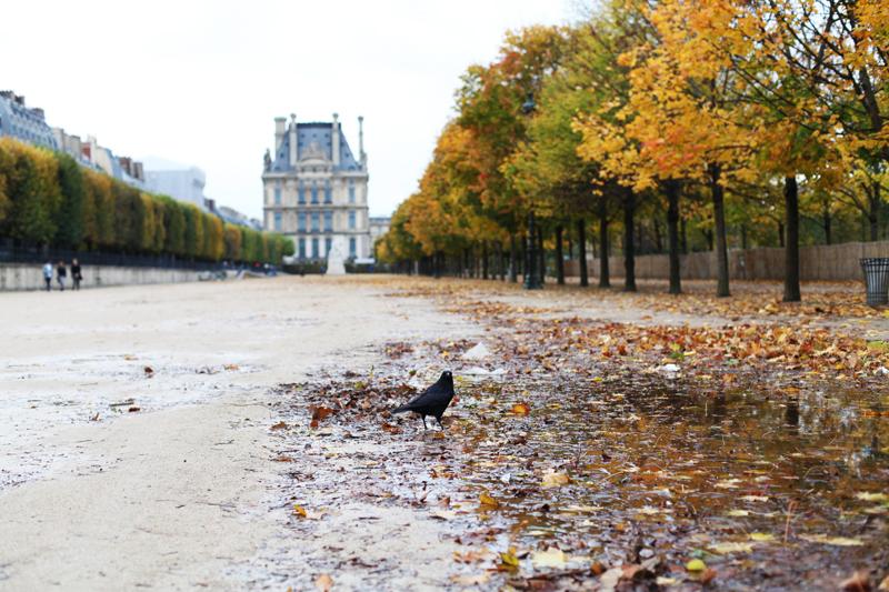 autunno corvo