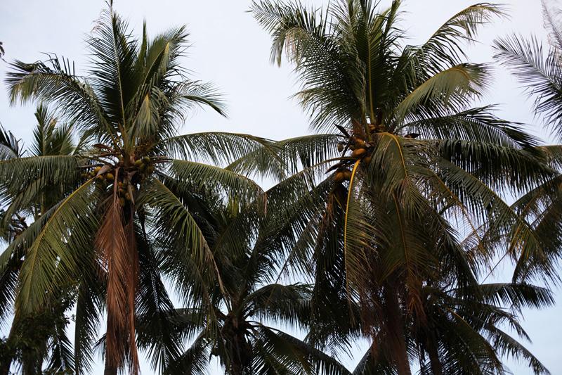 palme darwin