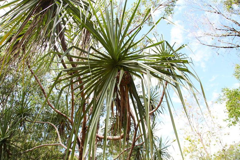 vegetazione australia