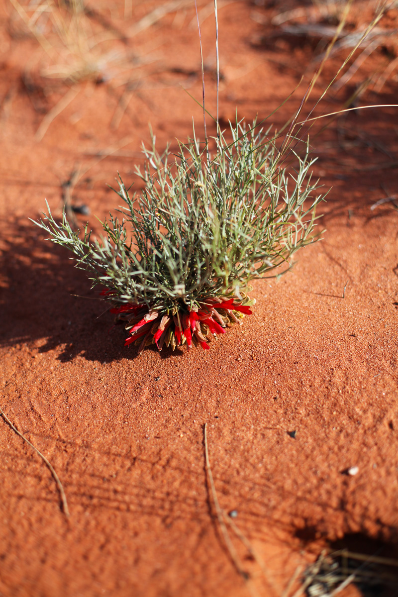 flora australia