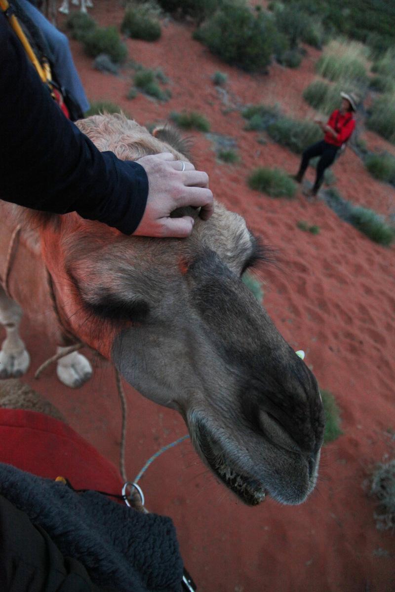 camel tours