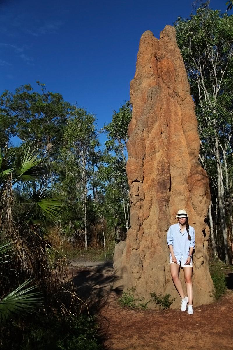 termitai giganti darwin