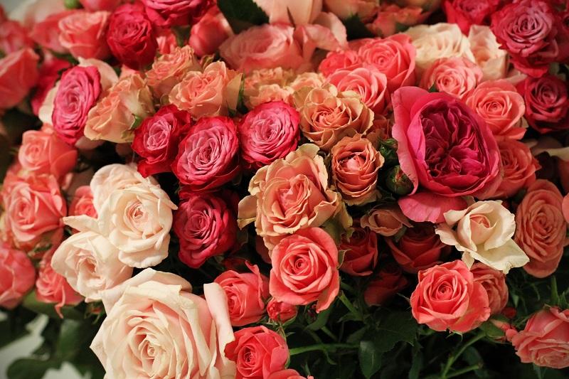 rose parigi