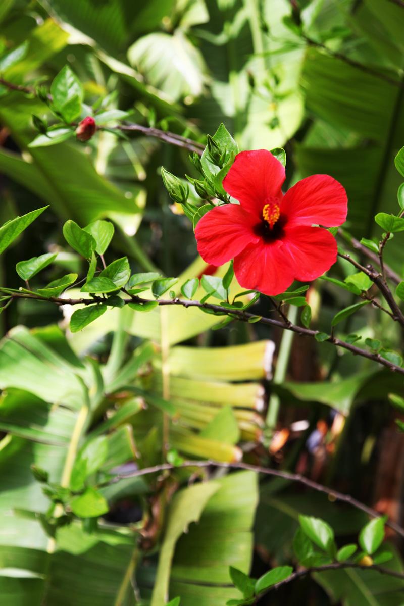 fiore rosso (1)