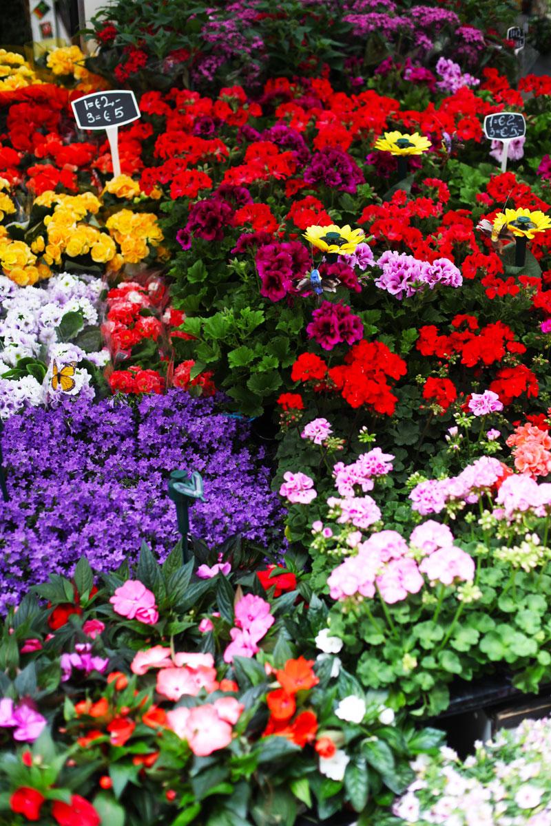 mercato dei fiori amisterdam