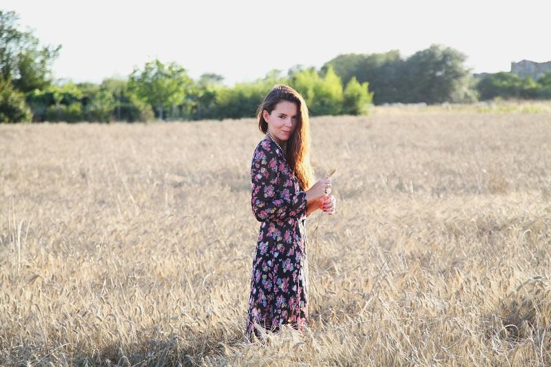 fotografie campo di grano spighe di grano