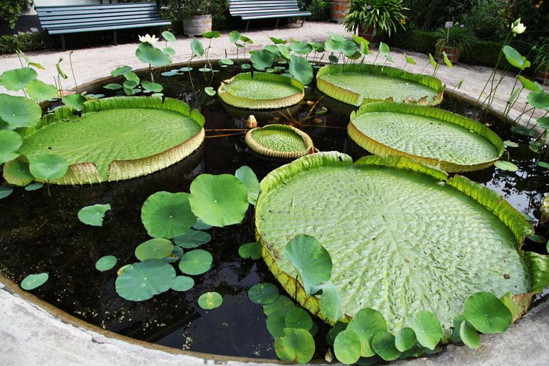 giardino botanico amsterdam