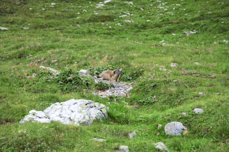 vacanze in austria montagna (16)