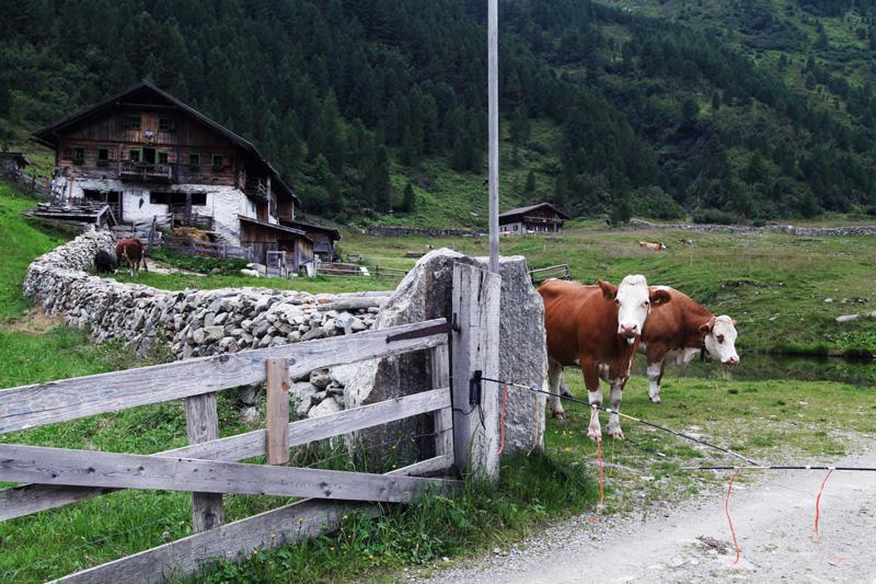 vacanze in montagna austria parco alti tauri (19)