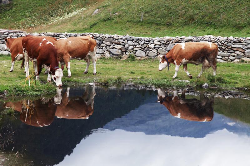 vacanze in montagna austria parco alti tauri (20)