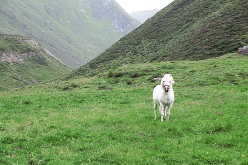 vacanze in montagna austria parco alti tauri (8)