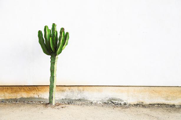 cactus san diego (1)