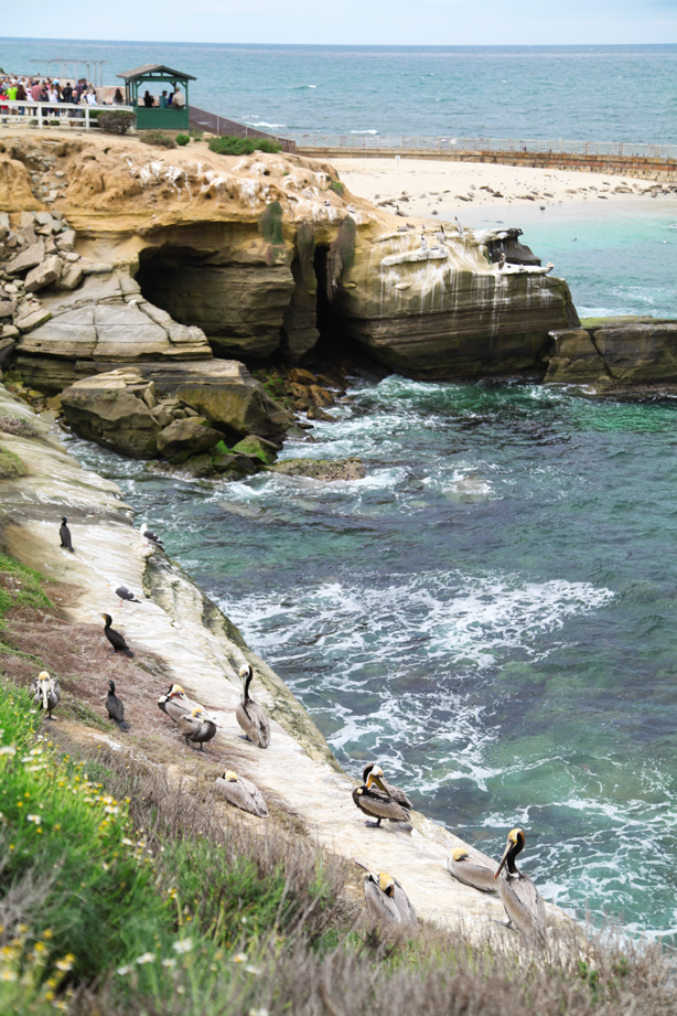 san diego beach  (4)