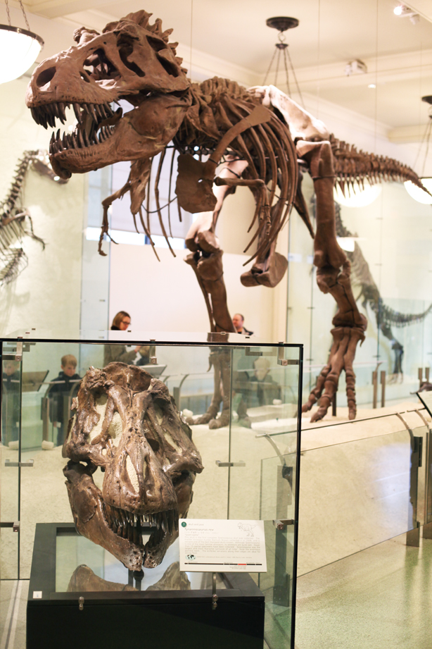 american museum of natural history (2)