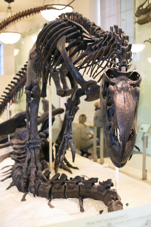 american museum of natural history (3)