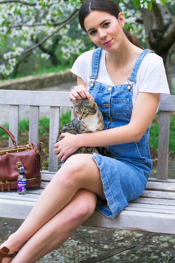 irene colzi gatto pannocchia