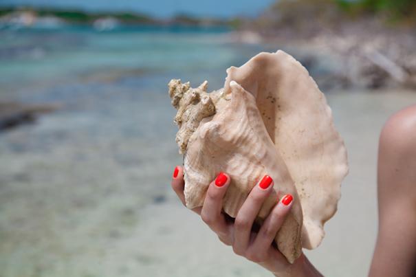 conchiglia caraibi