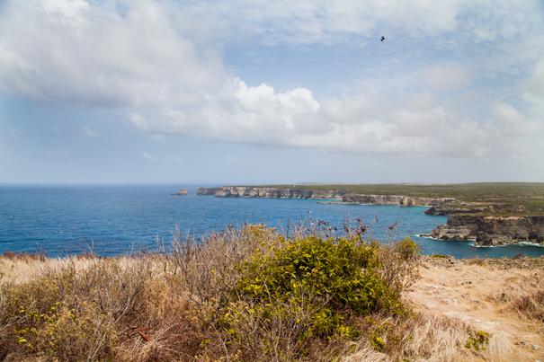 panorama guadalupe