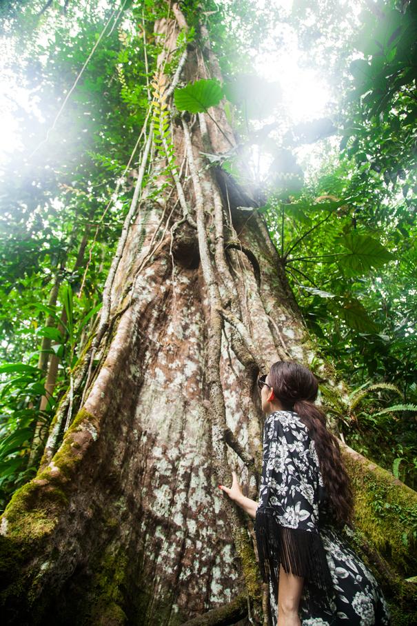 foresta guadalupe
