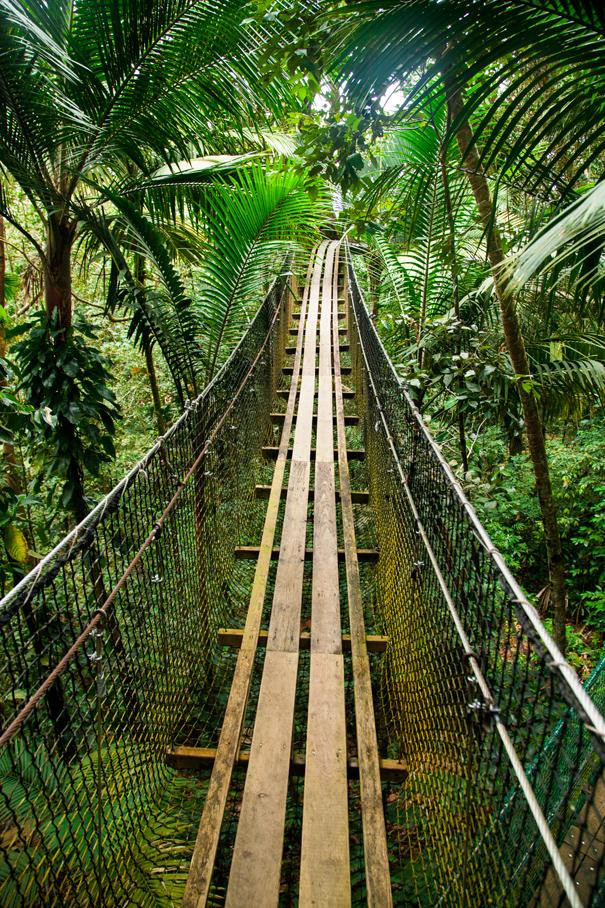 guadalupe foresta