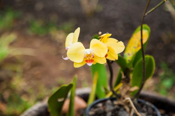 flora guadalupe