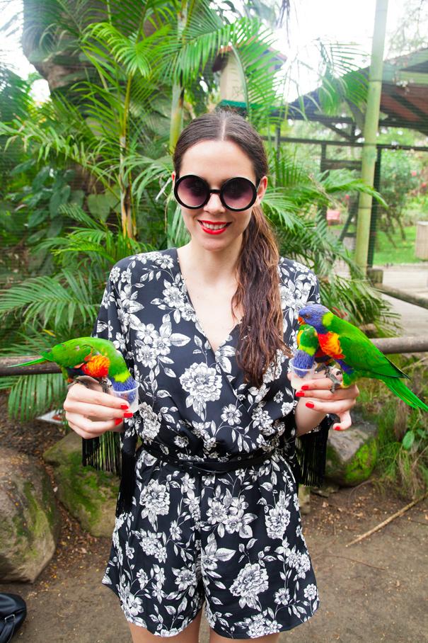 pappagalli isole tropicali