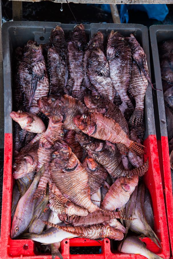 pesce di guadalupe