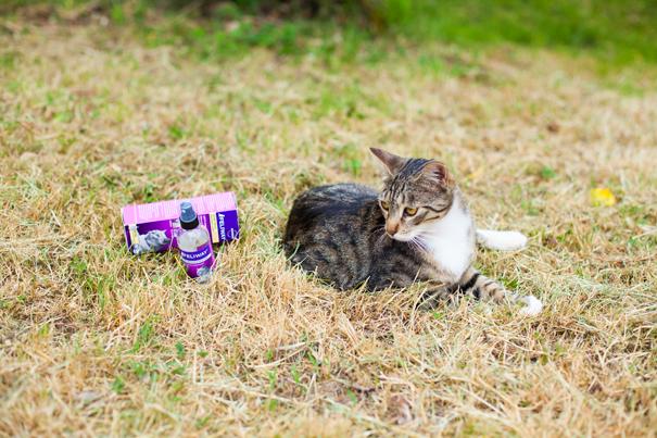 feliway gatti