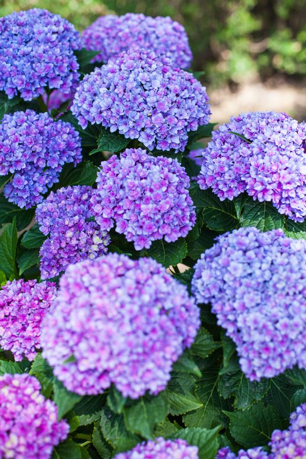fiori estate