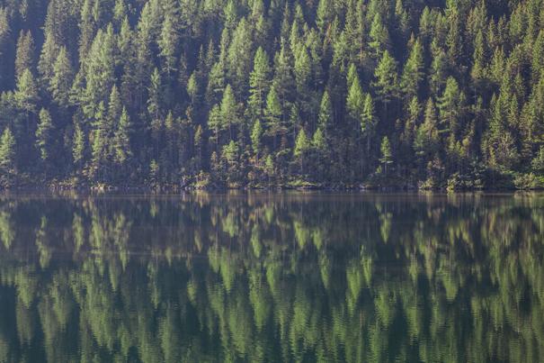 bosco riflesso