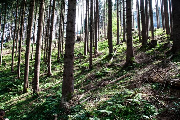 bosco montagna