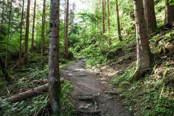 bosco austria