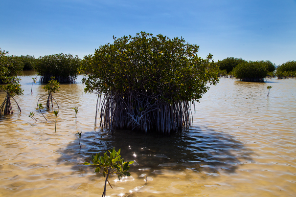 mangrovie parco nazionale rep dominicana