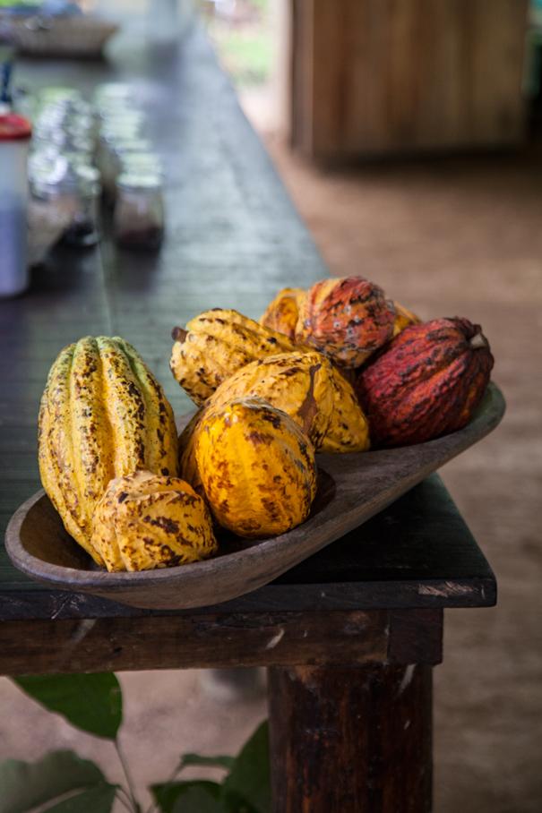 frutti del cacao