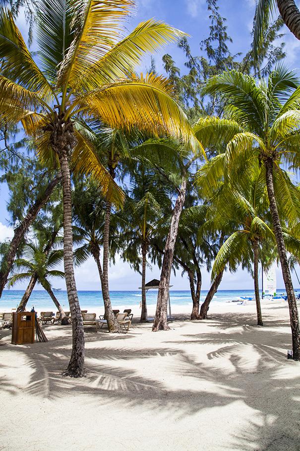 le spiagge più belle di barbados, le baie più belle