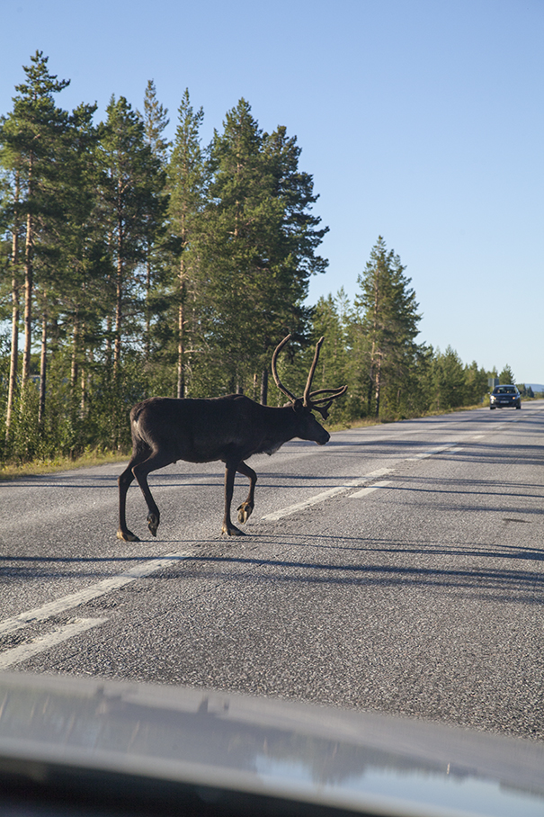 svezia renne in strada