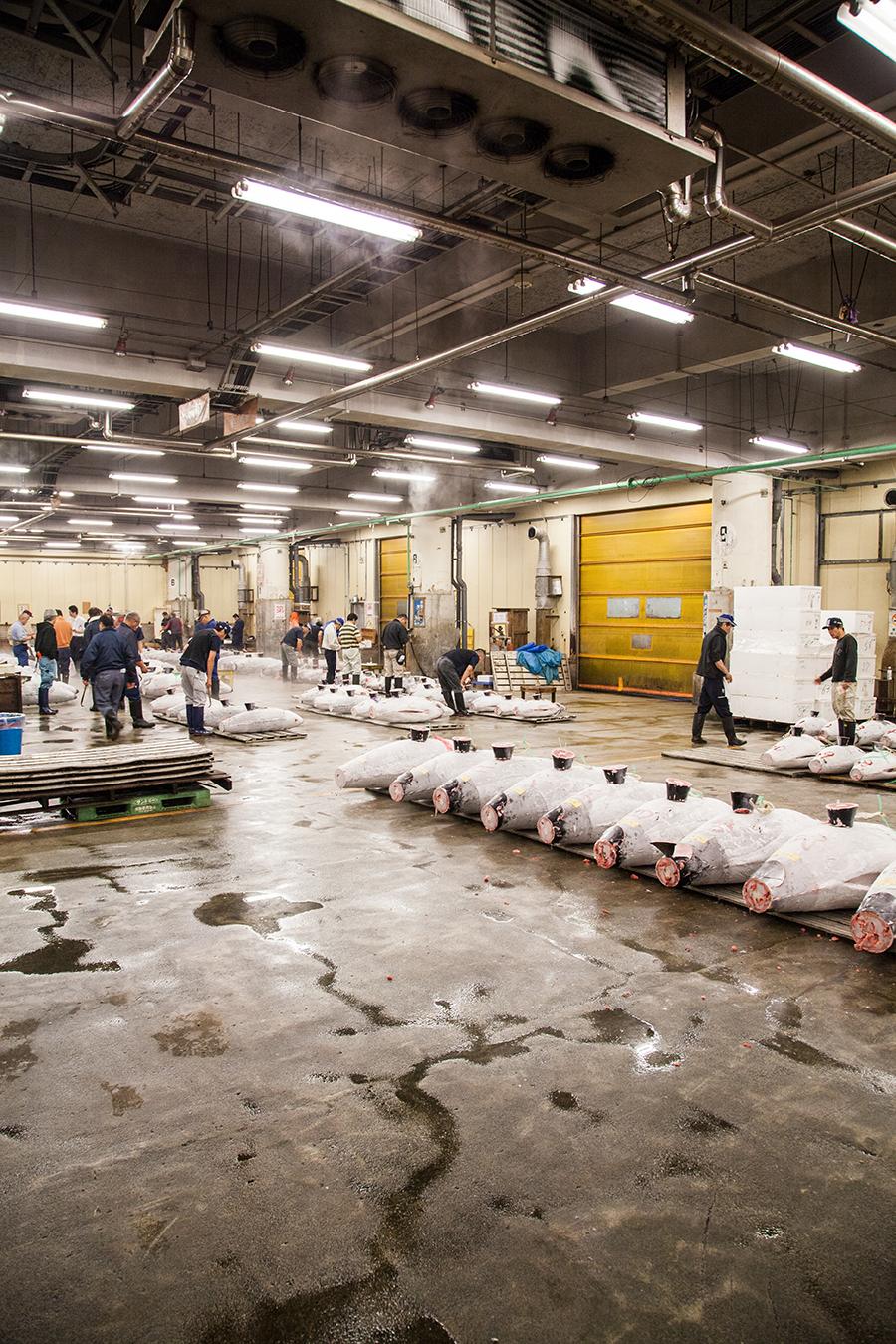 tokyo mercato del pesce asta del tonno