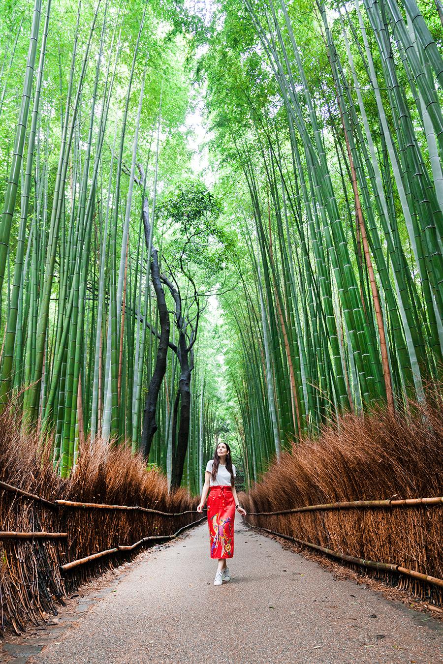 foresta di bamboo di kyoto