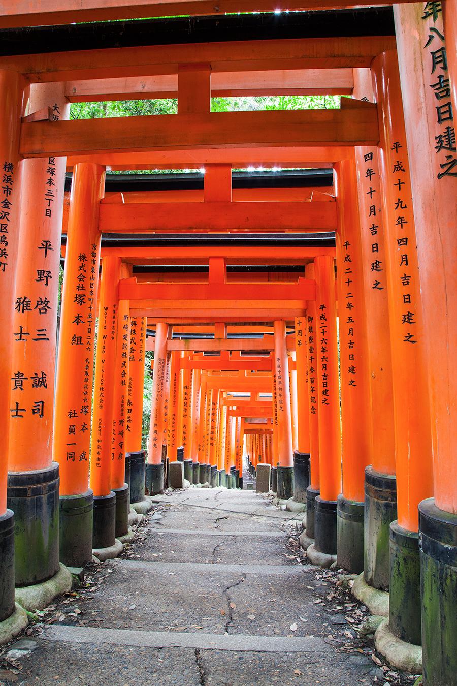 kyoto fushimi inari collina con tori rossi