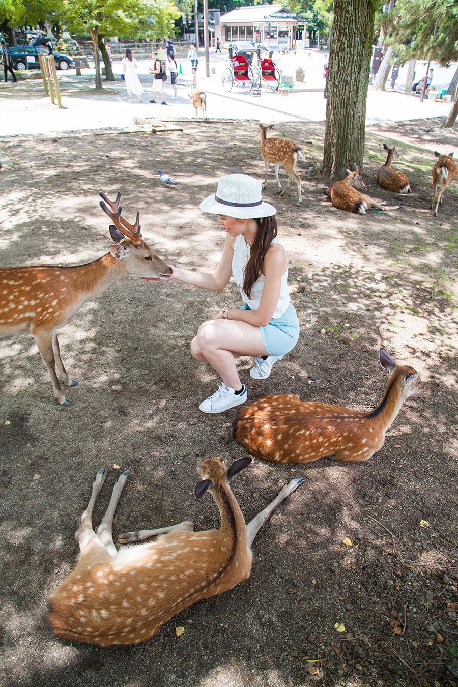 nara animali liberi
